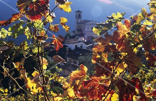 View of Castelrotto through autumn leaves, Ticino, Switzerland