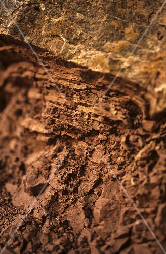 Terroir: red argillaceous shale with limestone, 'Roter Hang', Nierstein