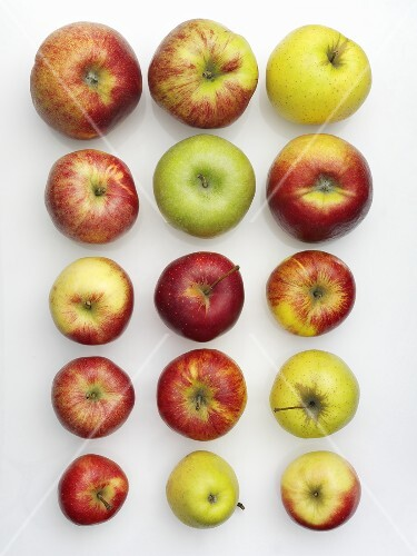 Various varieties of apples in rows (overhead view)