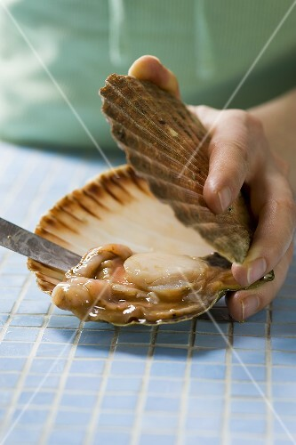 Shucking a scallop