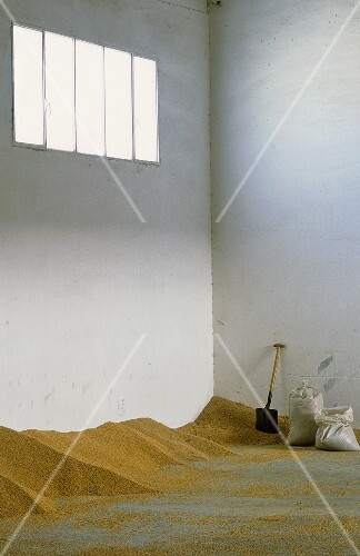 Rice in an almost empty storehouse with sacks and shovels