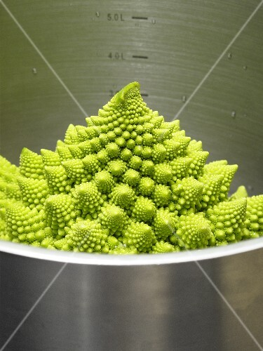 Romanesco broccoli in a pot
