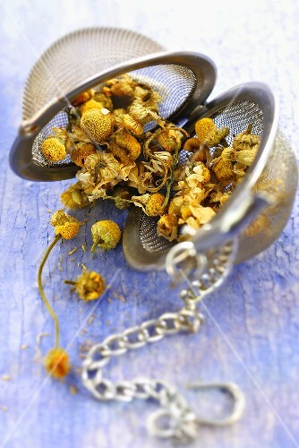 Dried chamomile in tea infuser