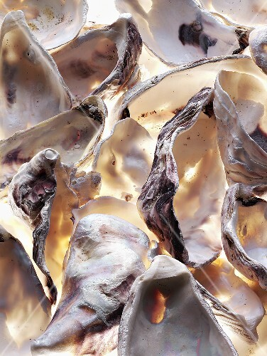 Oyster shells (full-frame)