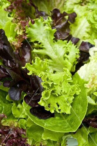 Mixed lettuce leaves