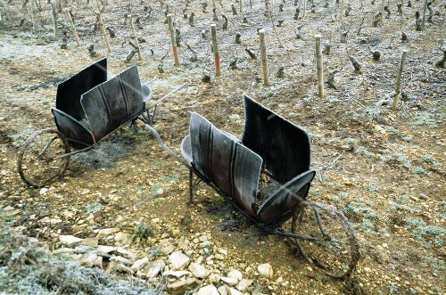 Old oil drums for heating the vines in winter (Burgundy)
