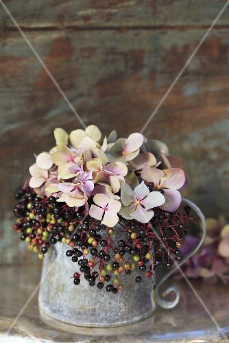 Elderberries and hydrangeas