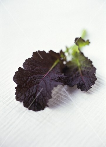 Two giant red mustard leaves