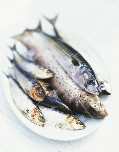 Fresh sardines, mackerel and trout