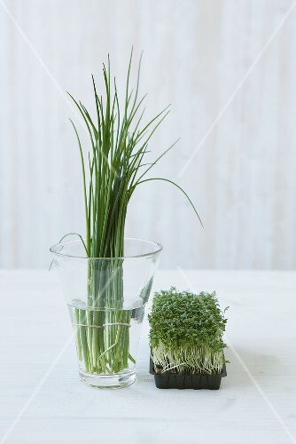 Chives and cress