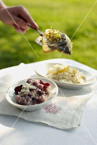 Amarone risotto (red wine risotto), lemon risotto and perch fillet (Italy)