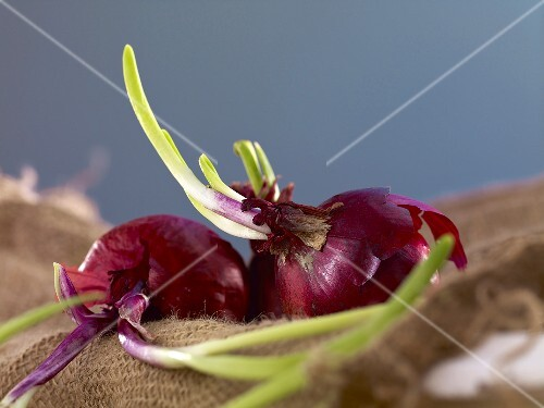 Red onions on a jute sack