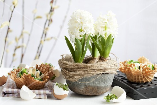 Hyacinths with spinach nests, eggs and sesame in wafer bowls