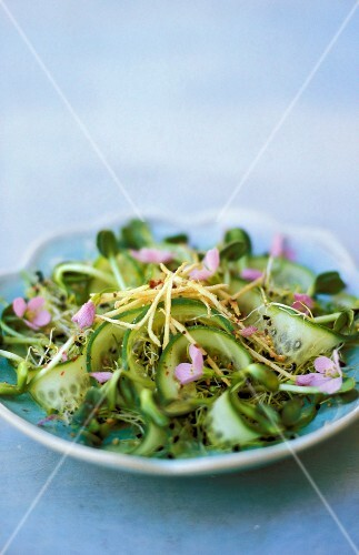 Sprouts salad with cucumber and meadow cardamine