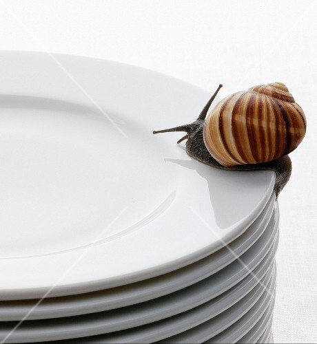 Live snail on a pile of plates