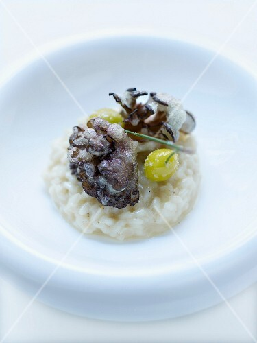 Risotto and light deep-fried mushrooms