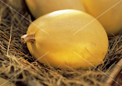 A Whole Spaghetti Squash on Hay