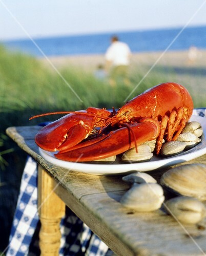 Cooked lobster with clams on table by sea (Maine, USA)
