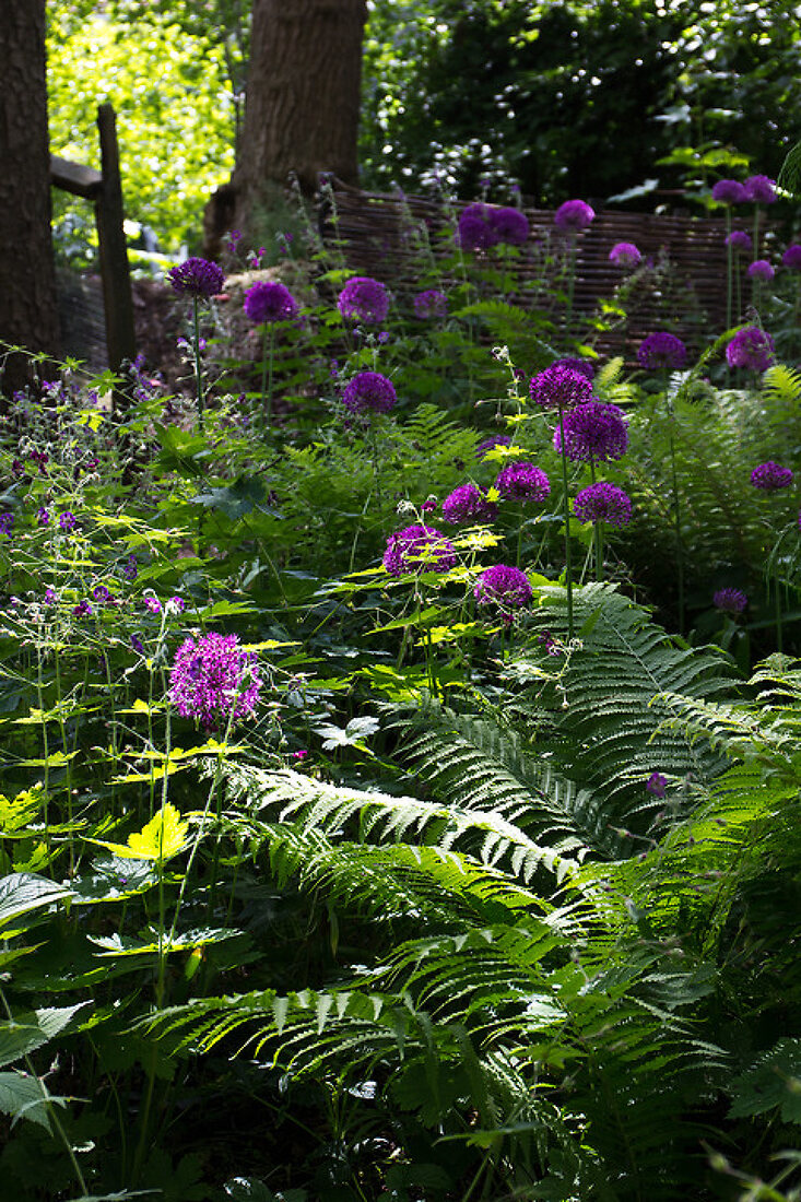 Garden in Purple and White Tones