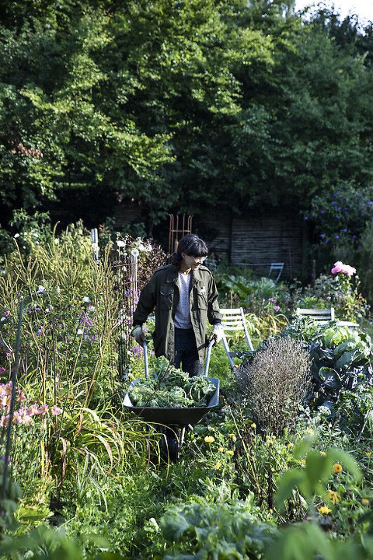 My Lush Allotment Kitchen Garden