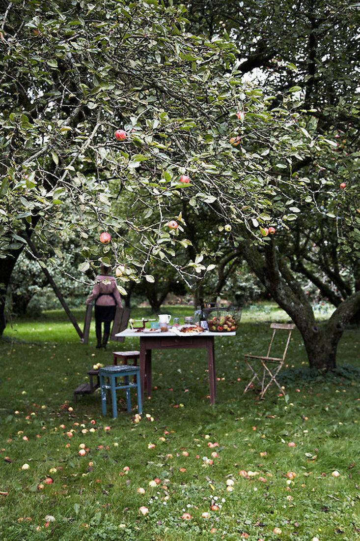 Johny Appleseed