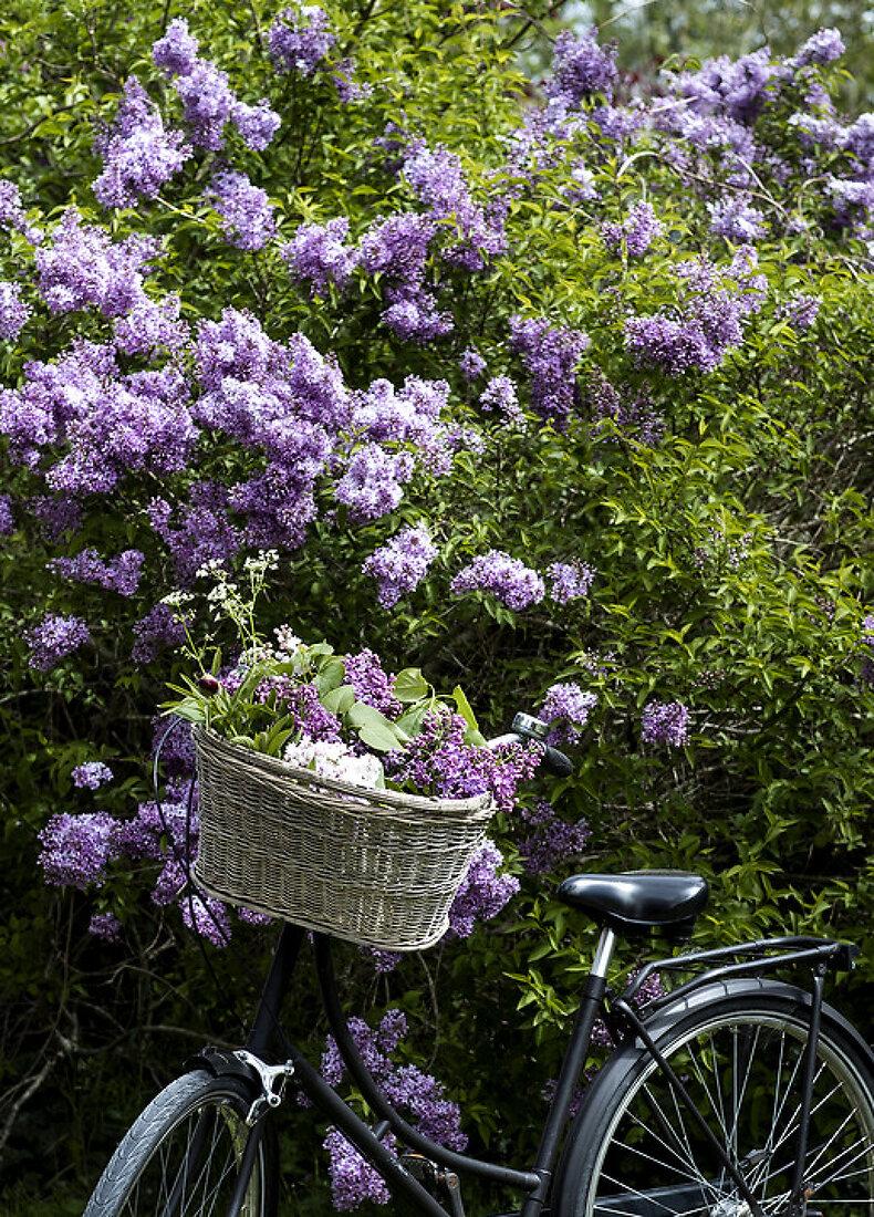 Sweet Blossoming May