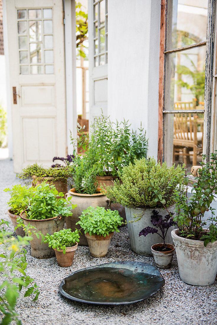 Herbs - a tasteful pleasure