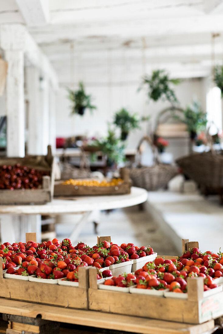 Elder & Strawberries