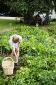 The Ecological Green Garden