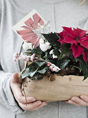 Plants of Christmas