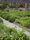 Urban Vegetable Garden at the Top