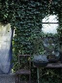 The Enchanting Plant Nursery