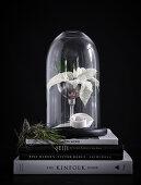 Winter White Flower of Christmas