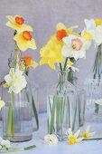 Spring in a Vase