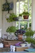 Fresh Herbs in the Kitchen