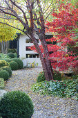 Colorful Autumn Garden