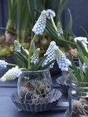 Flowering Spring Bulbs