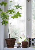 Plant a Lovely Windowsill
