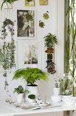 Sculptural Plants