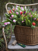 A Touch of Tulips