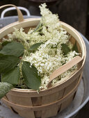Elderflower Fun