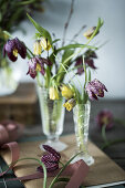 Spring Fling with Fritillaries