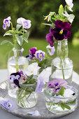Always Beautiful Pansies