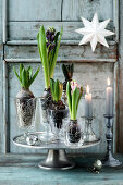 Decorate with Scented Hyacinths