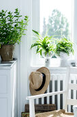 Radiator Plants