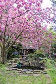 Beautiful Flowering Spring Trees