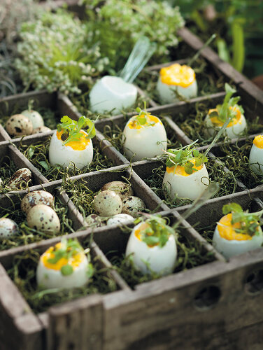 Vegetables for Easter - 11385116