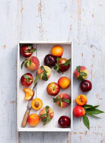 Fruit of Summer