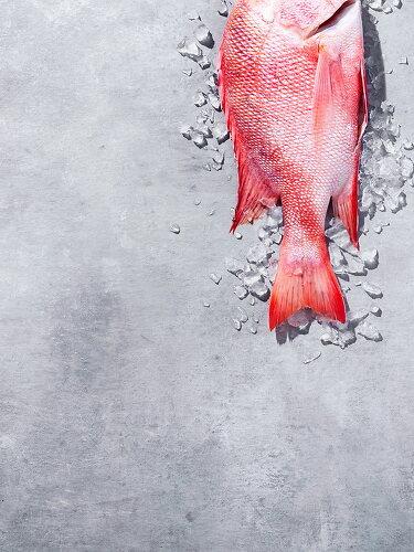 Sustainble Seafood