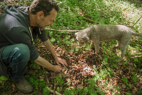 The Great Truffle Hunt